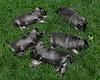 Kyra Puppies-20100625-0010