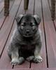 Kyra Puppies-20100629-0064