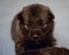 Kyra Puppies -20100609-0035