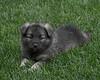 Kyra Puppies-20100629-0037