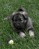 Kyra Puppies-20100629-0040