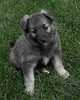 Kyra Puppies-20100629-0044