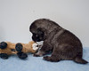 Kyra Puppies -20100609-0025