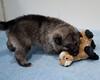 Kyra Puppies -20100609-0042