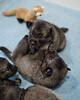 Kyra Puppies -20100609-0022