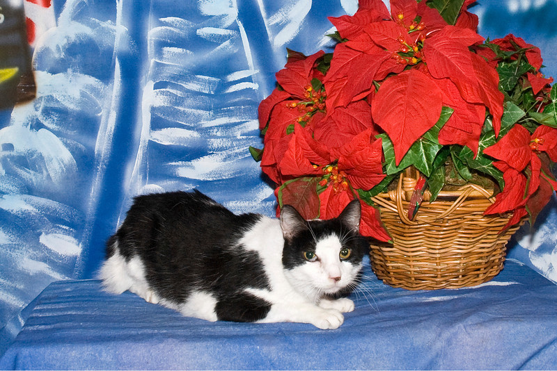 Gateway, a beautiful black and white cat, is owned and loved by David Williams.