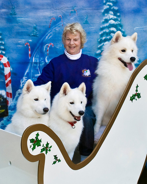 Janice McGlashon gets all three of her furkids, Piper, Cubbie and Jackson, to sit for a Christmas memory.
