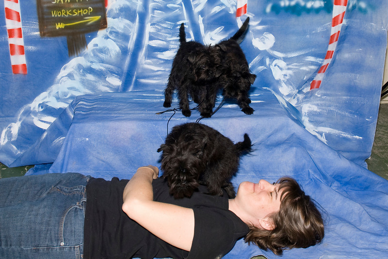 Mani, Luna & Cese,Affenpinscher puppies, want to know what this person on the floor is doing.