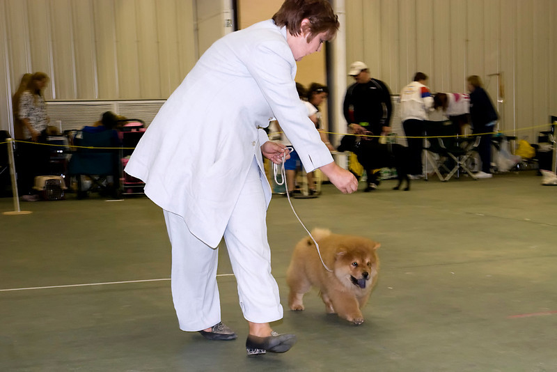 Bronia Potts showing her new Chow Chow puppy, Andy