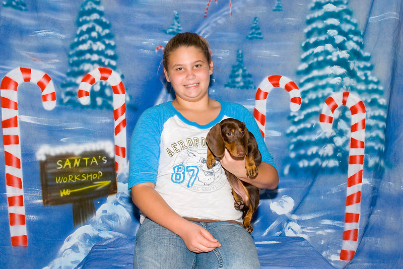 Illey, a Standard Dachshund puppy, and her new best friend, is a member of the Buchanan family.