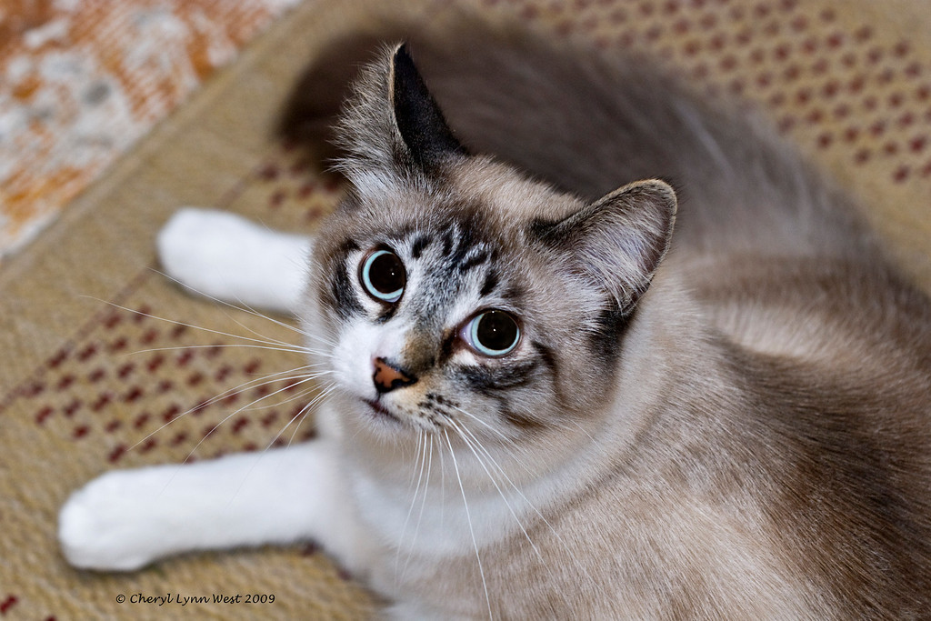 Jason, with his beautiful ice blue eyes