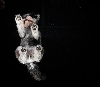 Dogs Life - Tasmin