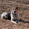2009-01-18.More Backyard Dogs.081-97