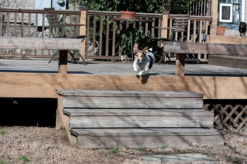 2009-02-22.Dogs.024-154
