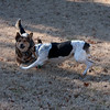 2009-01-18.More Backyard Dogs.109-100