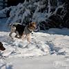 2009-03-01.more snow.104-2-10