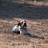 2009-01-18.More Backyard Dogs.147-102