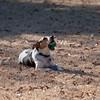 2009-01-18.More Backyard Dogs.154-103