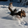 2009-03-01.more snow.102-2-9