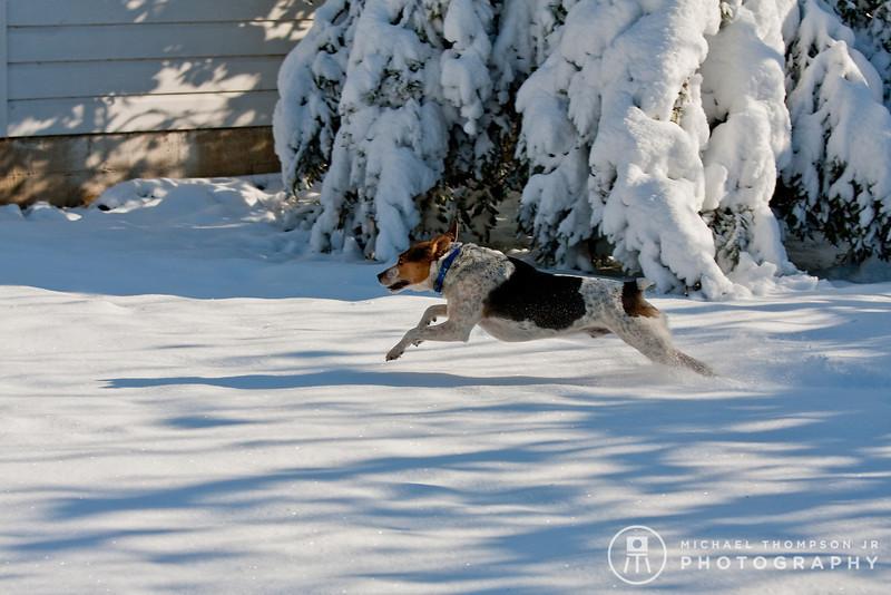 2009-03-01.more snow.053-2-5