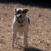 2009-01-18.Carson Throwing the Ball.236-122
