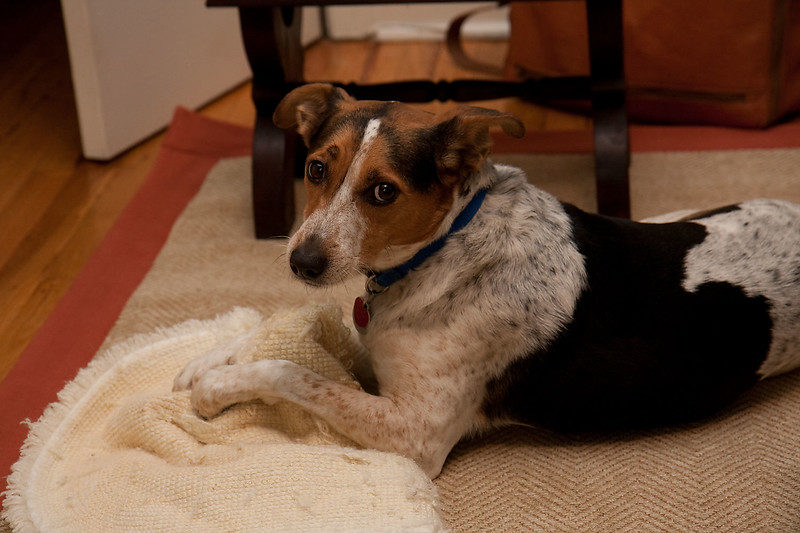 2009-01-13.Dogs.013-85
