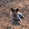 2009-01-18.More Backyard Dogs.171-104