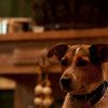 Dogs and NYE (90 of 657)-71
