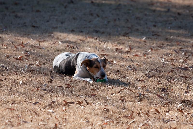 2009-01-18.More Backyard Dogs.142-101