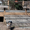 2009-02-22.Dogs.026-156