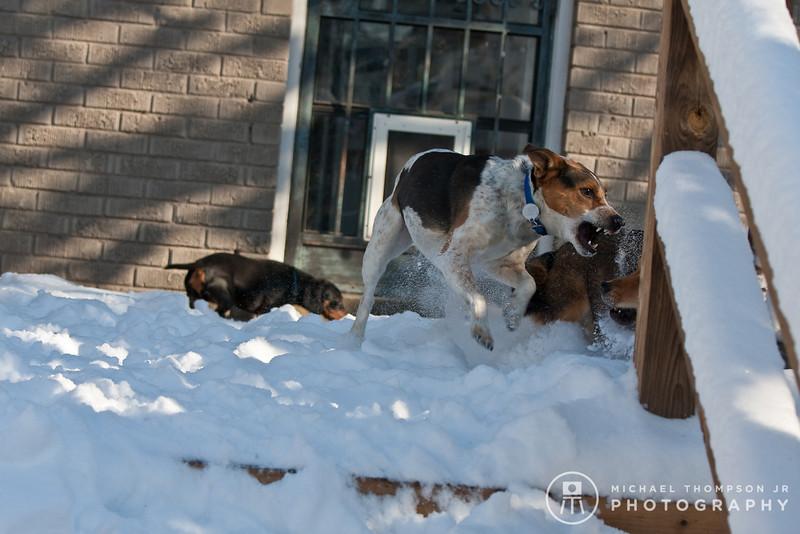2009-03-01.more snow.378-36