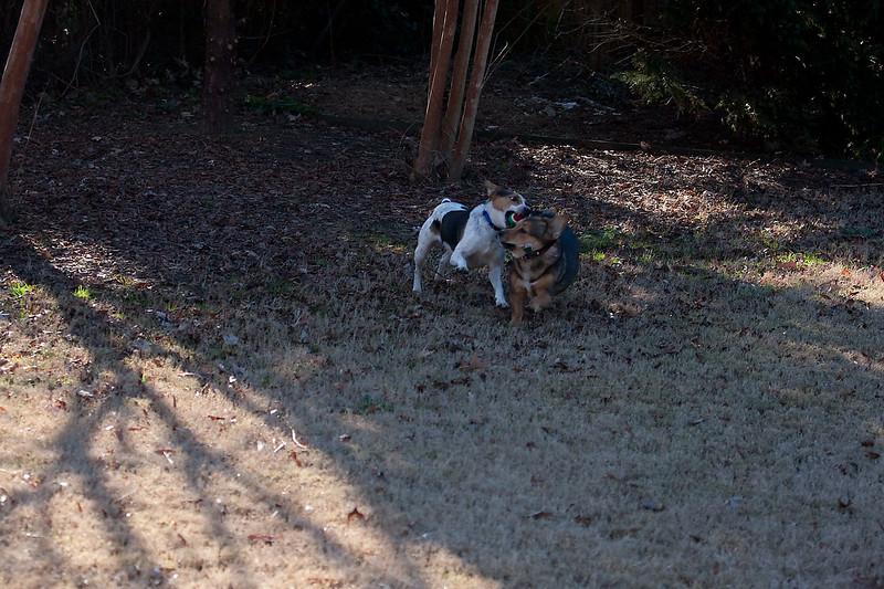 2009-01-18.More Backyard Dogs.043-94