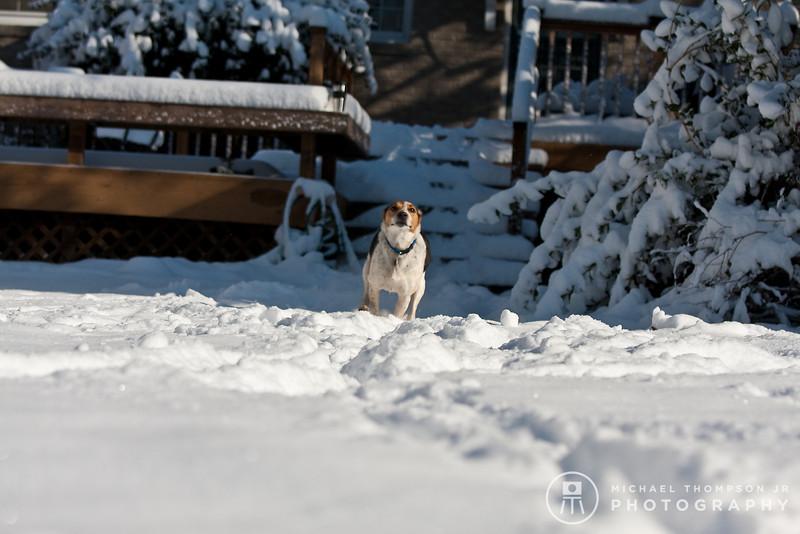 2009-03-01.more snow.178-2-18