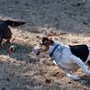 2009-01-18.More Backyard Dogs.108-99