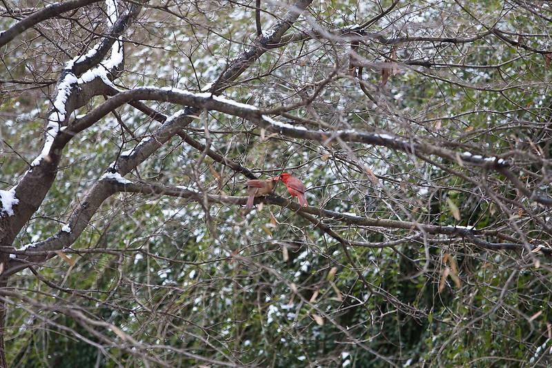 2009-01-29.Bird Feeder with Squirrel.053-19