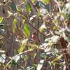 2009-02-14.more birds.069-28