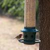 2009-02-14.more birds.128-33