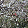 2009-01-29.Bird Feeder with Squirrel.054-20