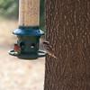 2009-02-14.more birds.110-31