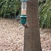 2009-01-29.Bird Feeder with Squirrel.087-25