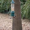 2009-01-29.Bird Feeder with Squirrel.083-24