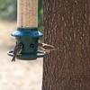 2009-02-14.more birds.113-32