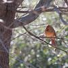 2009-01-24.Birds.258-14