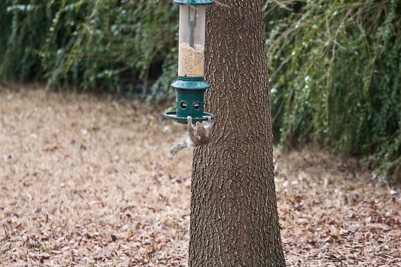 2009-01-29.Bird Feeder with Squirrel.088-26