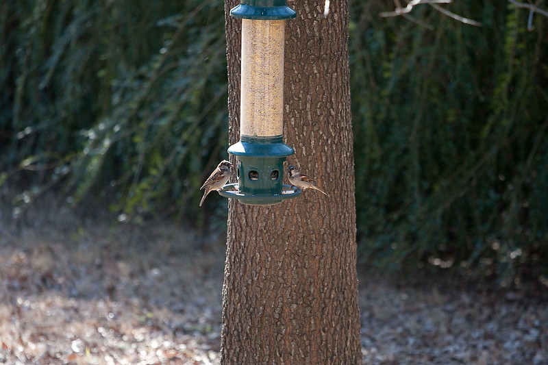 2009-01-24.Birds.066-1