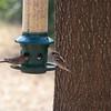 2009-02-14.more birds.109-30