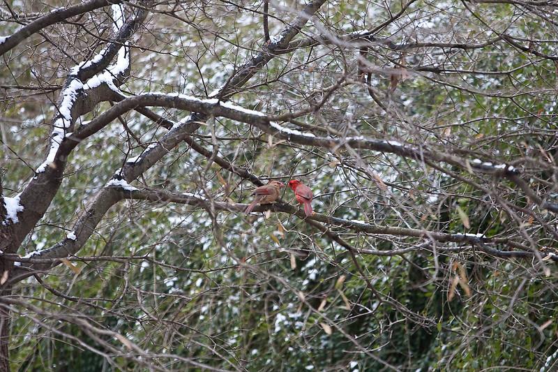 2009-01-29.Bird Feeder with Squirrel.055-21