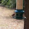 2009-02-14.more birds.101-29