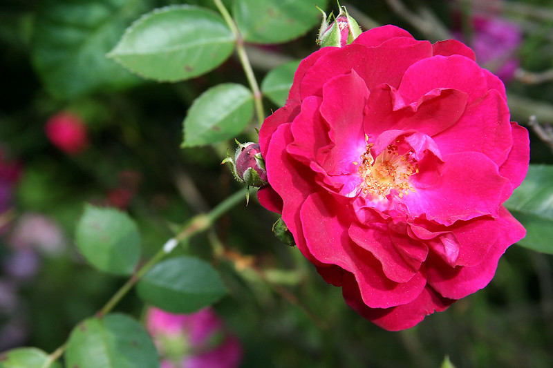 Flowers (5 of 78)