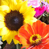 Flowers (29 of 78)
